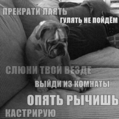собака_претензии_безысходность_песочница_763556.jpeg